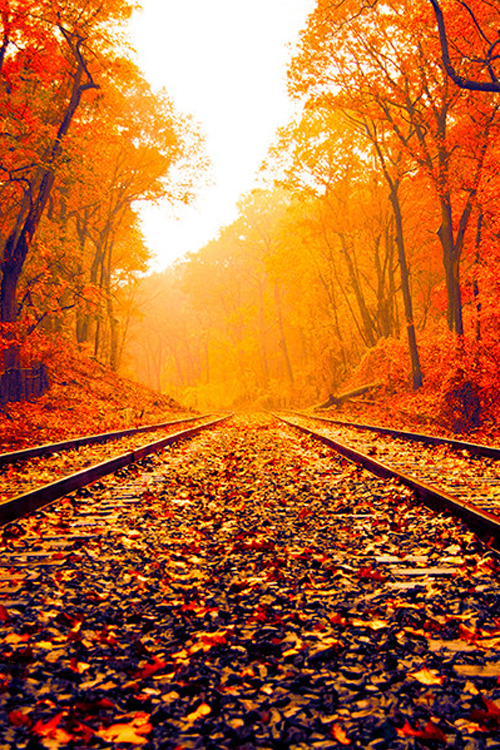 Hipster Fall Wallpaper Fall Hd Wallpaper Tumblr
