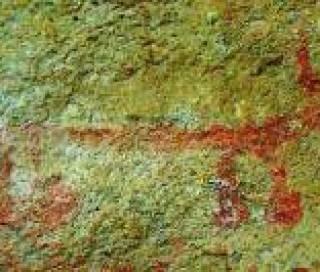 Art rupestre d'Inde à priori représentant un Sivatherium
