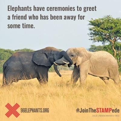 96 elephants tumblr