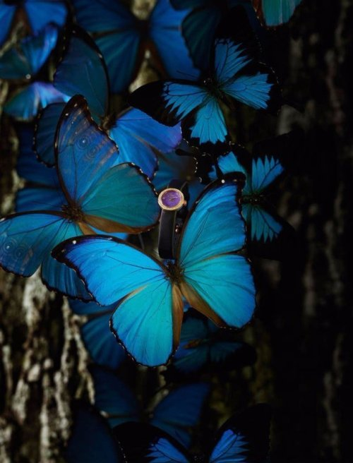 Blue Butterfly Tumblr : butterfly, tumblr, Aesthetic, Pictures, Butterfly