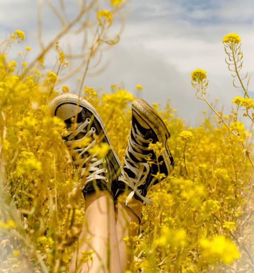 Cute Ukulele Wallpaper Hey Sunflowers 🌻 I Ve Started Learning How To