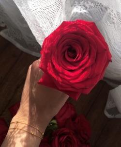 red roses tumblr
