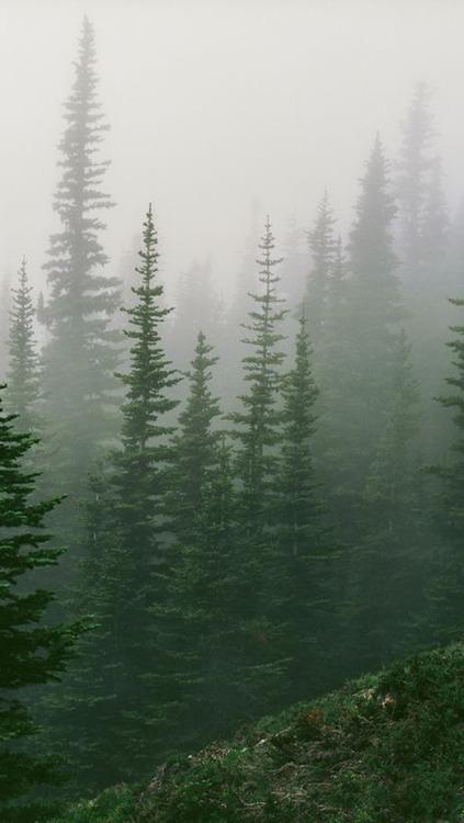 Gravity Falls Landscapes Phone Wallpaper Pines Not Palms Tumblr