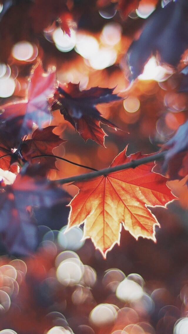 Fall In Paris Wallpaper