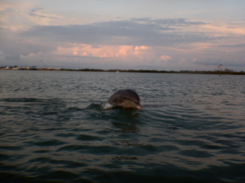 "New dolphin identified in the harbor! ""Warsaw"" was named after a fish called a Warsaw Grouper"
