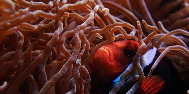 Mercan resiflerinin alt kısımlarında yaşayan kriptobentik balıklar, mercan resiflerindeki diğer canlıların besin ihtiyacını karşılıyor.