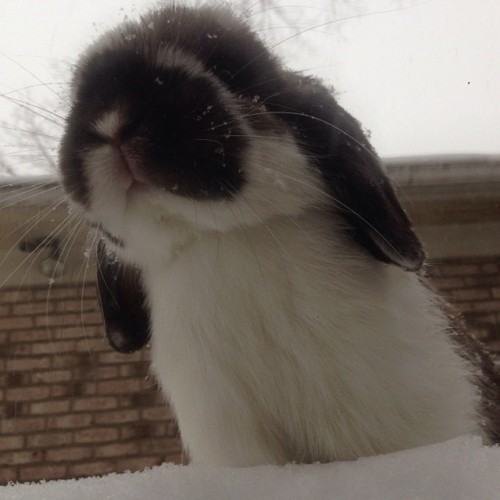 bunny trains for winter