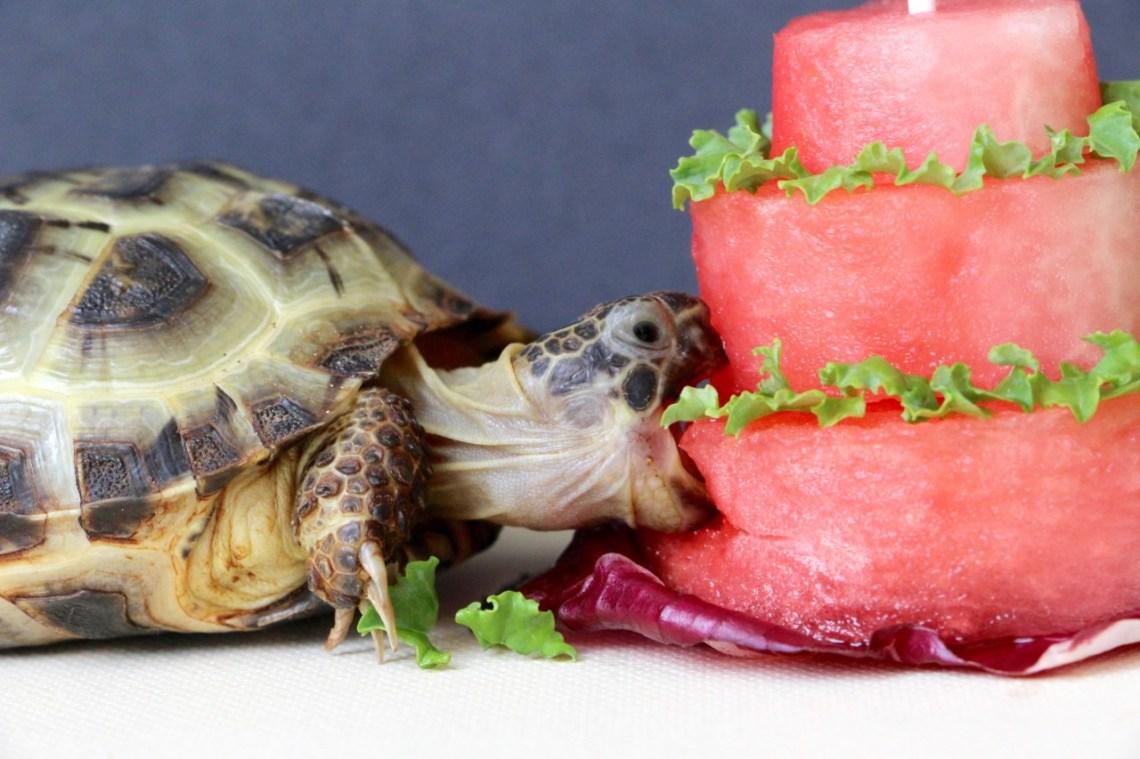 I love watermelon!