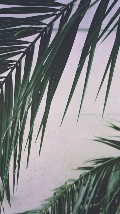 Fall Leaves Watercolor Wallpaper Palm Leaves Aesthetic Tumblr