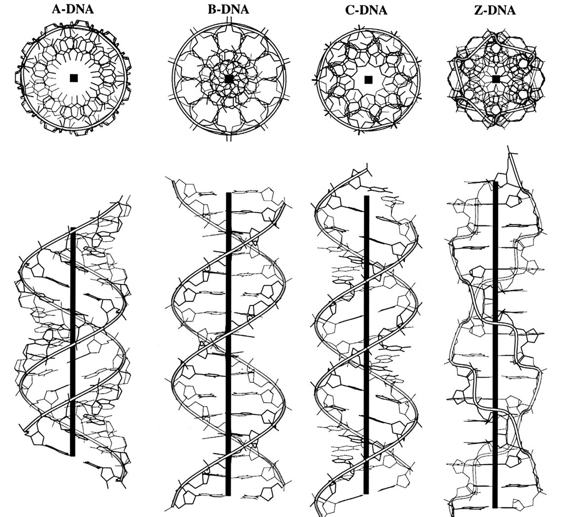 Scienceing! • infinity-imagined: The different structural...