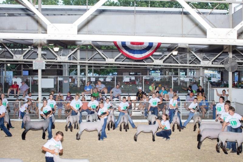 11 августа дети принимают участие в соревнованиях по овцеводству «Intermediate 4-H Sheep» в Овечном сарае на ярмарке штата Айова в Де-Мойне. Участники оценивают их способность демонстрировать и контролировать овец, а не характеристики животных.