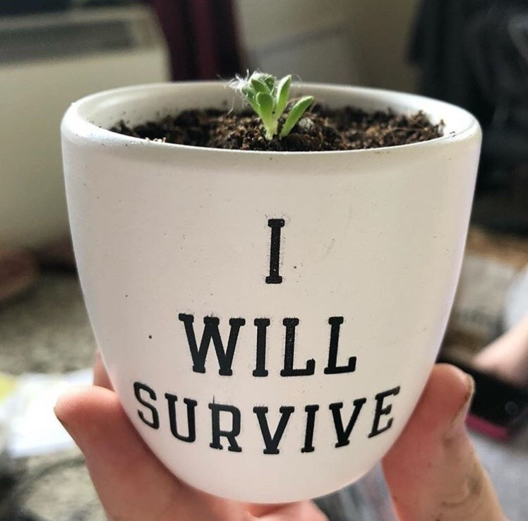 starlight-witches:✨🌱 Positivity plant wishes you well 🌱✨