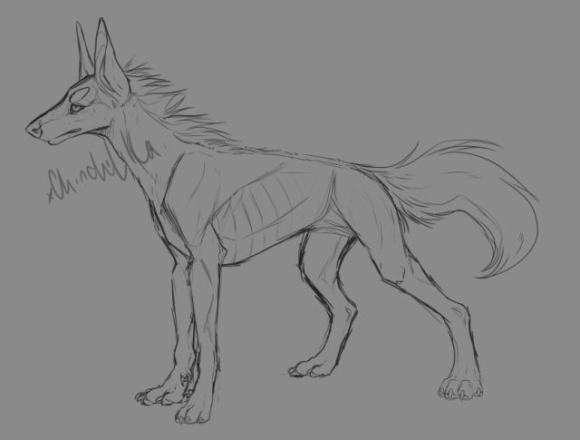 dog sketch on Tumblr