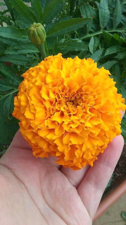 marigold kitchen  Tumblr