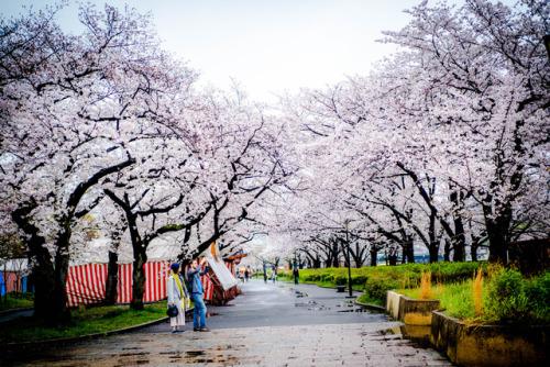 毛馬桜之宮公園 | Tumblr