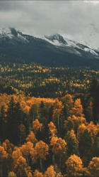 fall aesthetic wallpapers iphone