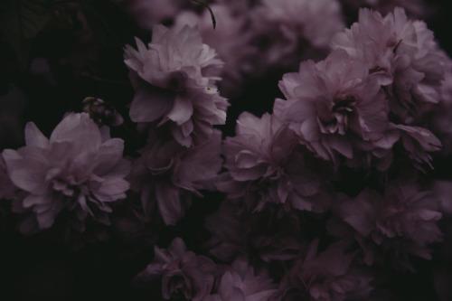 gothic flower tumblr