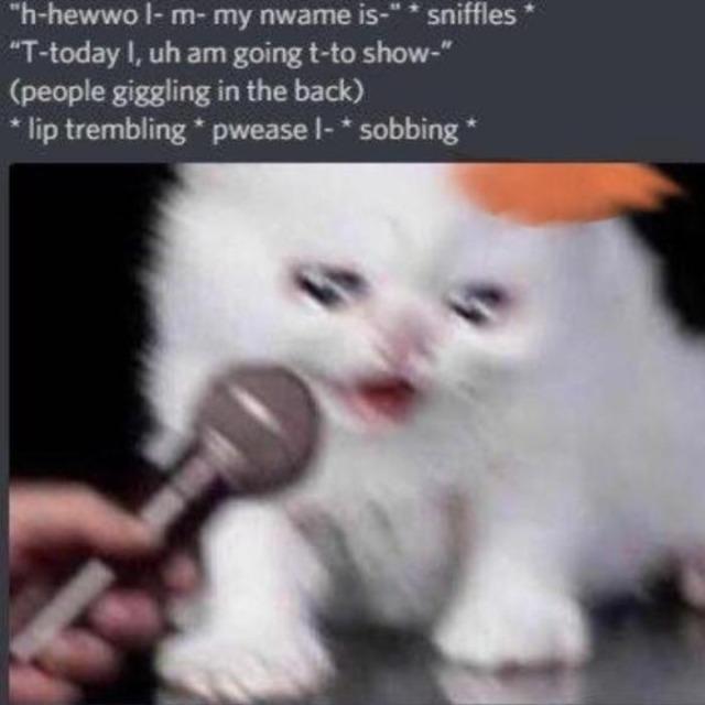 Sad Cats Memes