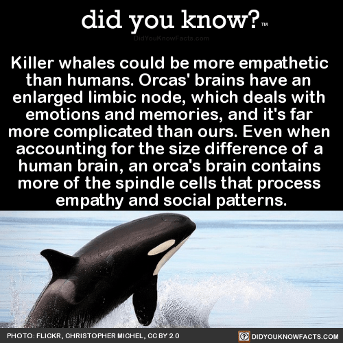 BrighterLonger didyoukno Killer whales could be more