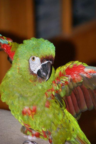 severe macaw tumblr