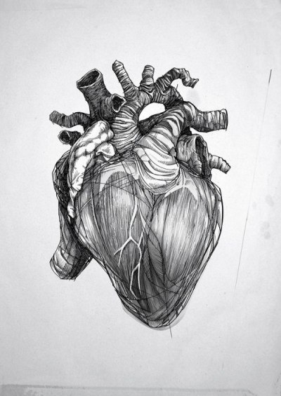 Human Heart Drawing Tumblr
