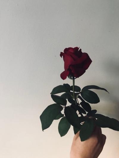 rose quotes tumblr