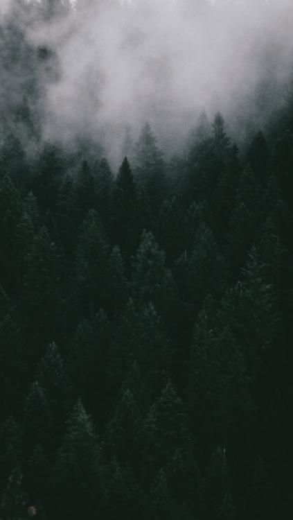 Fall Leaves Iphone Wallpaper Dark Green Aesthetic Tumblr