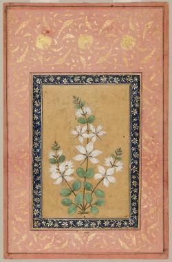 heaveninawildflower-a-flowering-plant-17th