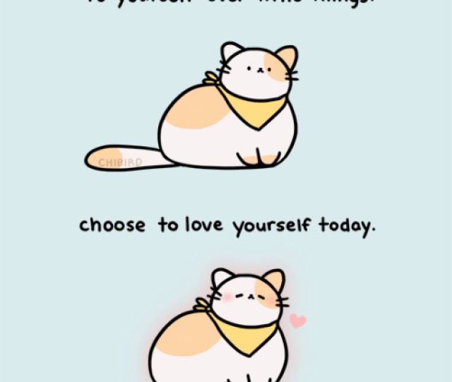 A Very Soft And Chubby Cat With An Important Reminder For Self Love  E  A Pre