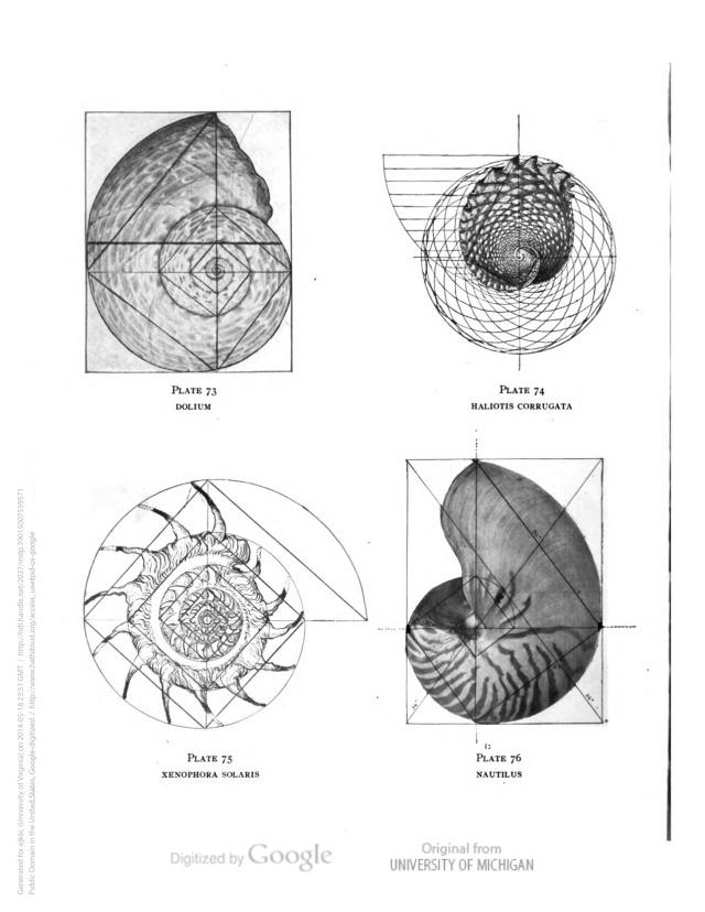 geometry matters — Proportional form by Samuel Colman, N