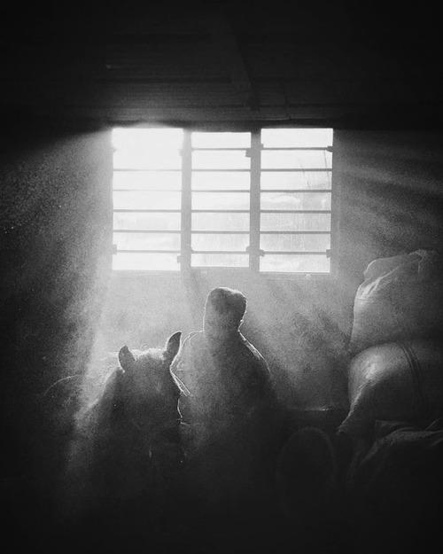 The horse story @hojjathamidi 1