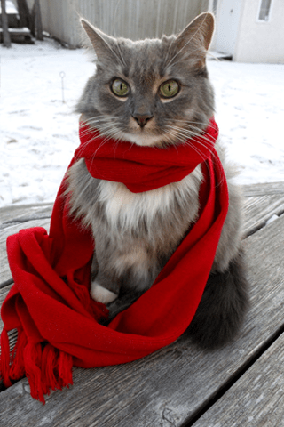 Wallpaper Cute Cats Kittens Caterville Cats Wearing Scarves