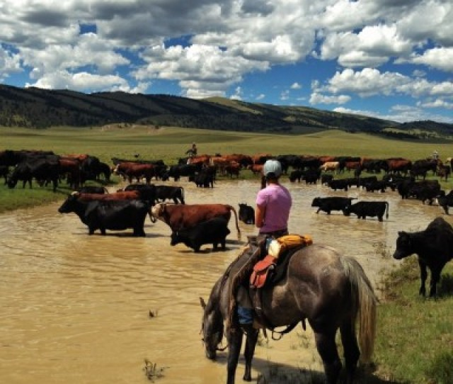 Alwaysrideafasthorsecattle Ranchmiss These Days More Then Anythingcoloradocolorado Cattle Ranchranch Liferanch Handcowgirlcowboybeef