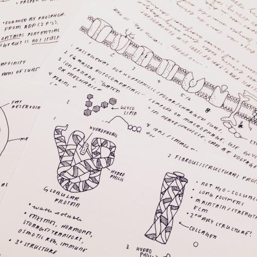 study guide verified