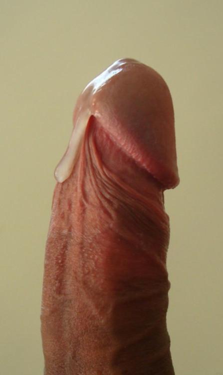 dripping cocks tumblr