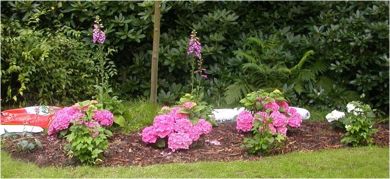 Umgestaltung Einer Gartenecke Seite 2 Gartengestaltung Mein
