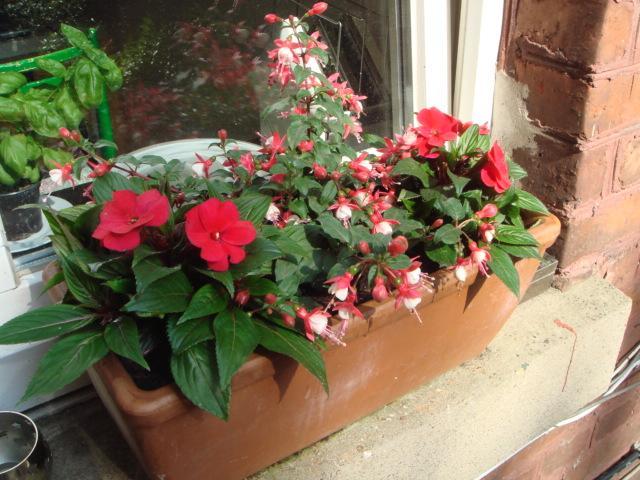 Welche Blumen fr Blumenkasten im Schatten  Mein schner Garten Forum