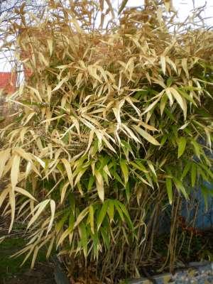 bambus schneiden - boisholz, Terrassen ideen