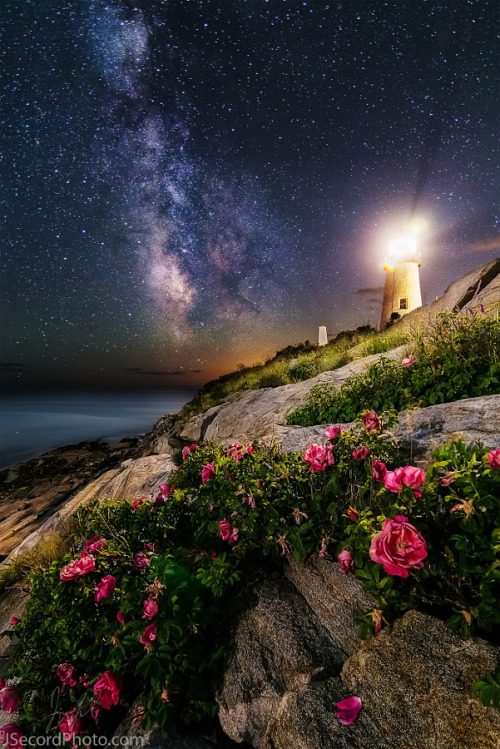 """drxgonfly: """" The Roses of Pemaquid Point (by Jon Secord) """""""