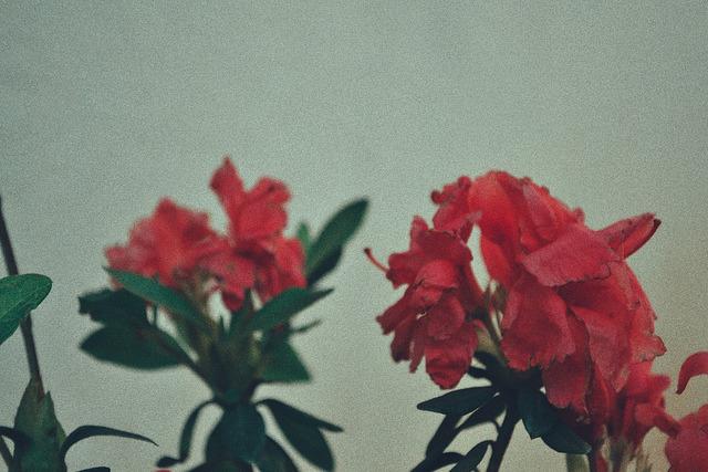 Pq fotografar é amor ♡ on Flickr. Pq fotografar é amor ♡