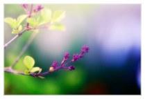 fleur arbuste_0816