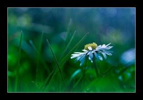 fleur_3276