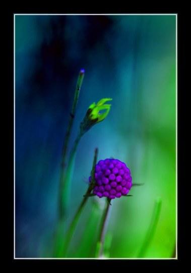 fleur_9250