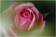 flore (21)