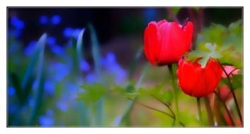 tulipe_0913