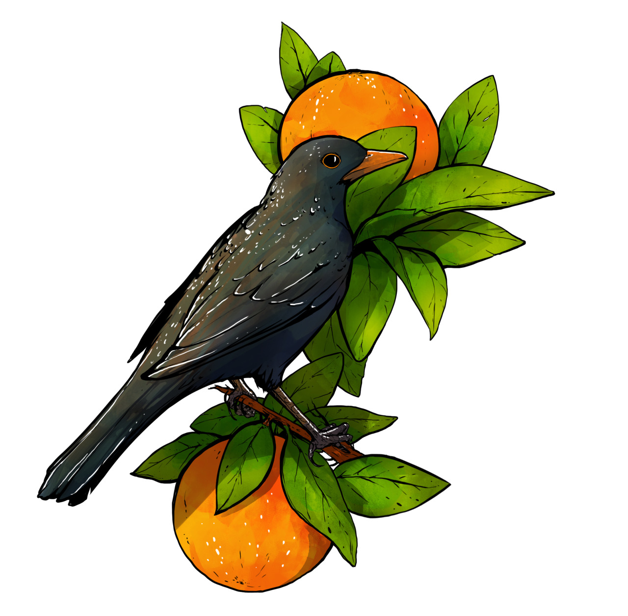 been thinking about a possible tattoo design….. blackbird + oranges
