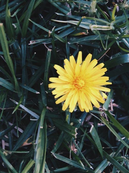 yellow flowers on Tumblr