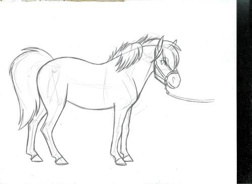 chincoteague pony on Tumblr