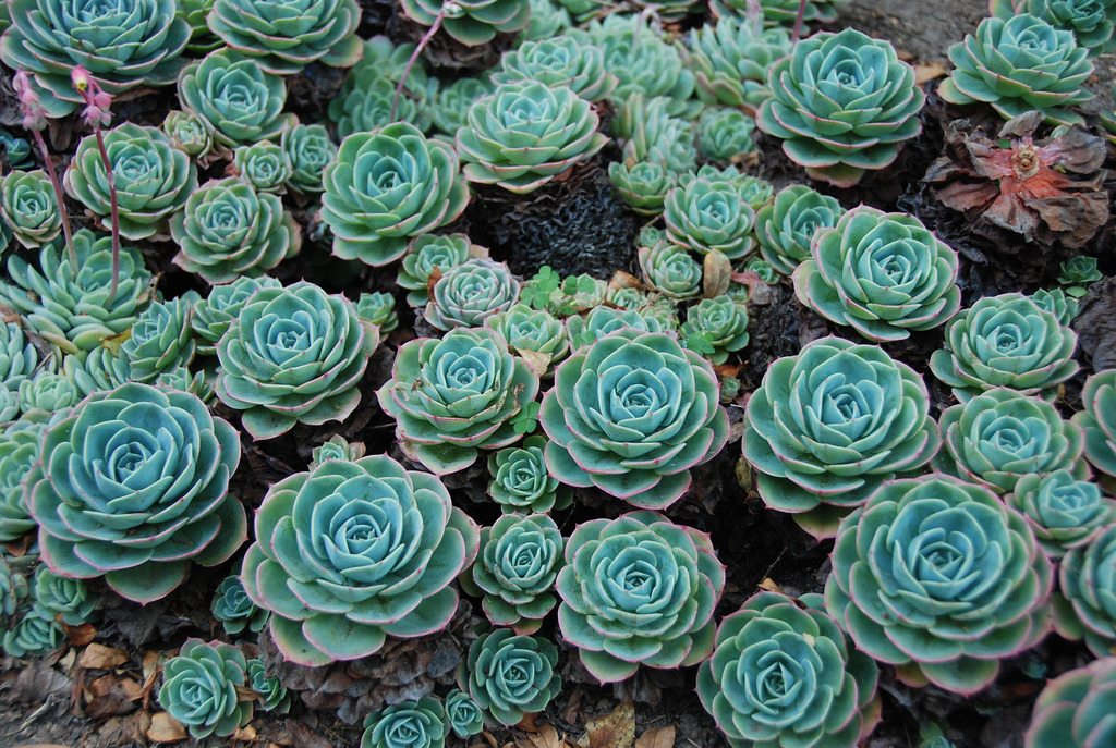 Fall Succulent Wallpaper 187 Nature Beauty Of Cactus Plants