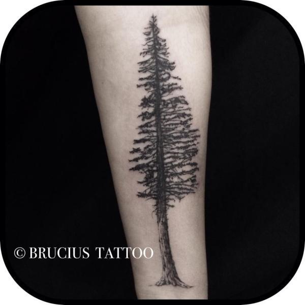20 Redwood Tree Tattoo Black Ideas And Designs